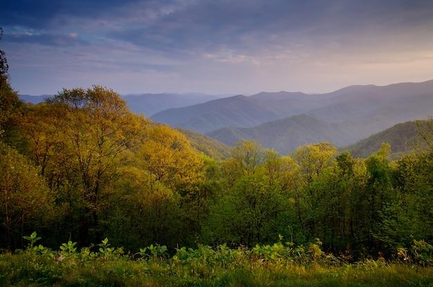 Belas paisagens de árvores crescendo na encosta da montanha durante o pôr do sol