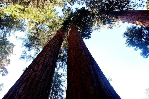 Belas paisagens de árvores da floresta e vegetação