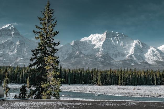Belas paisagens de árvores verdes, rodeadas por montanhas nevadas