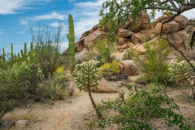 Belas paisagens de diferentes cactos e flores silvestres no deserto de sonora fora de tucson, arizona