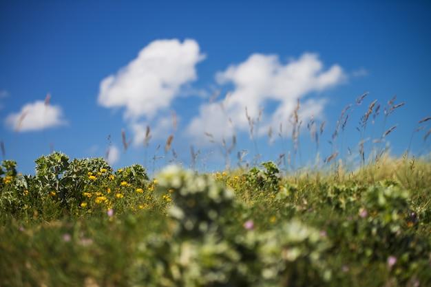 Belas paisagens de um campo verde com flores amarelas sob o céu nublado