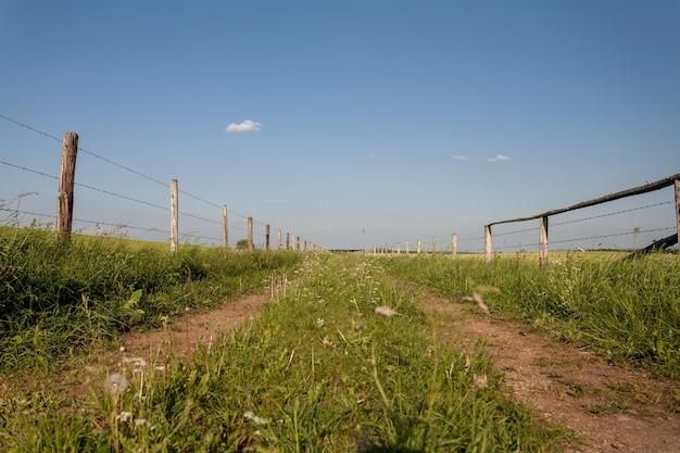 Belas paisagens de um campo verde no campo na região de eifel, alemanha