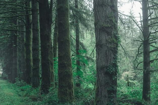 Belas paisagens de uma floresta no campo em um dia enevoado