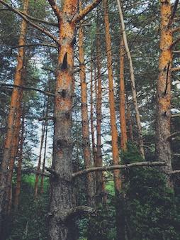 Belas paisagens de uma floresta no campo
