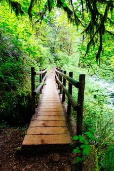 Belas paisagens de uma floresta selvagem incrível com vegetação de tirar o fôlego