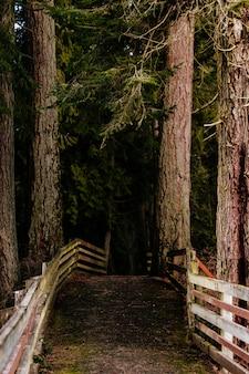 Belas paisagens de uma incrível floresta selvagem