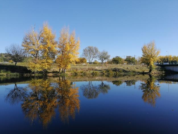 Belas paisagens de uma série de árvores refletindo em um lago durante o dia