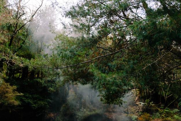 Belas paisagens de vapor em uma floresta com muitas árvores verdes