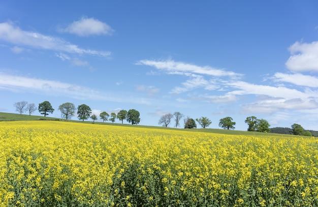 Belas paisagens do campo de mostarda ao redor de pitlochry, na escócia