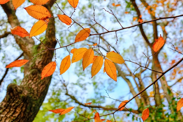 Belas paisagens do início do outono em um dia ensolarado no parque