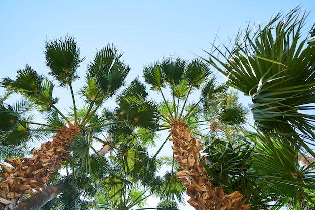 Belas palmeiras na ilha tropical