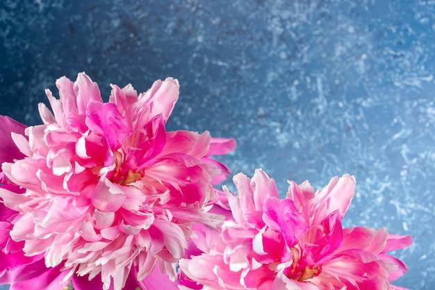 Belas peônias rosa suaves fechem em pano de fundo texturizado azul claro. layout festivo para cartão ou convite para o dia das mães ou feriados da mulher. orientação horizontal. copie o espaço para o texto.