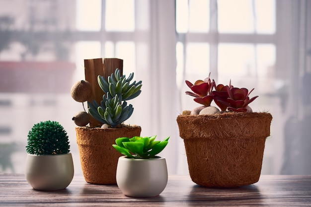 Belas plantas de casa em vasos de flores sobre a mesa