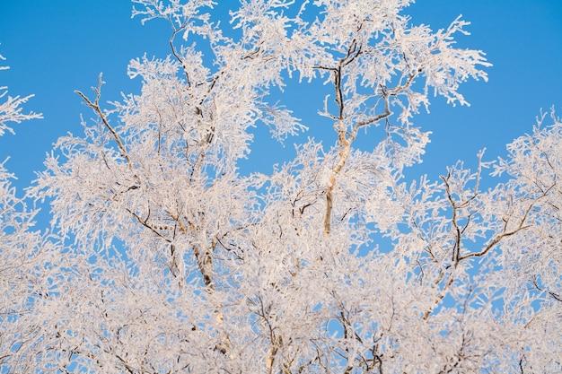Beleza cênica e diversão no inverno