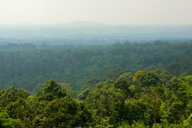 Beleza da floresta verde no norte de bengkulu, indonésia, viagem à ásia