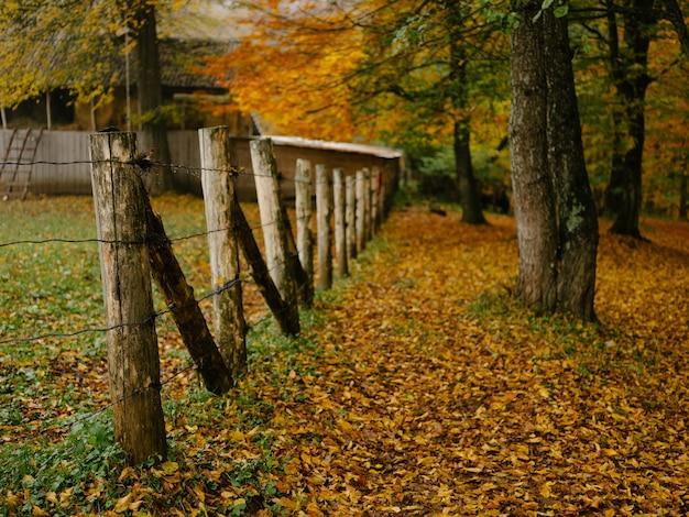 Beleza da natureza das árvores da floresta de outono