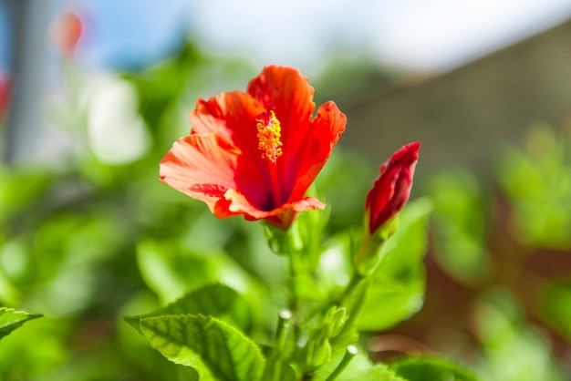 Beleza e flores coloridas
