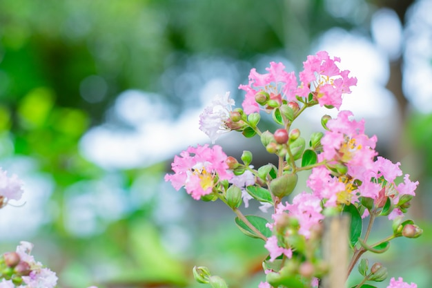 Beleza flor rosa no jardim