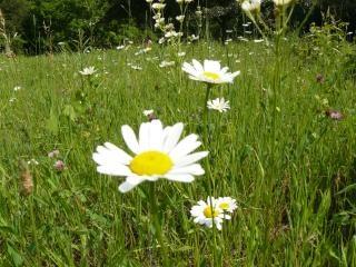 Beleza natural do lago escondido jardins, flor