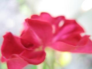 Beleza natureza simplista, rosa