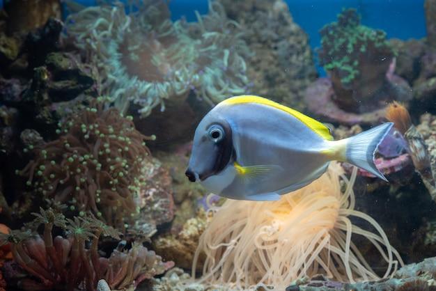 Beleza subaquática de peixes e recifes de coral