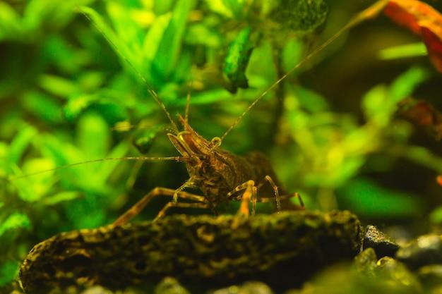 Belo aquário com uma abundância de plantas e habitantes do mundo subaquático.