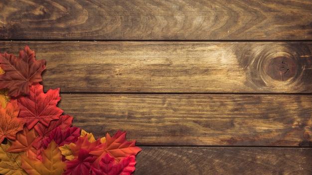 Belo arranjo de folhas de outono brilhantes