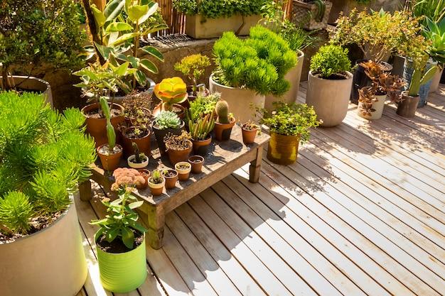 Belo arranjo de plantas em estufa