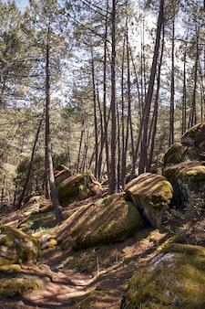 Belo caminho ao lado de uma montanha entre pinheiros para trekking
