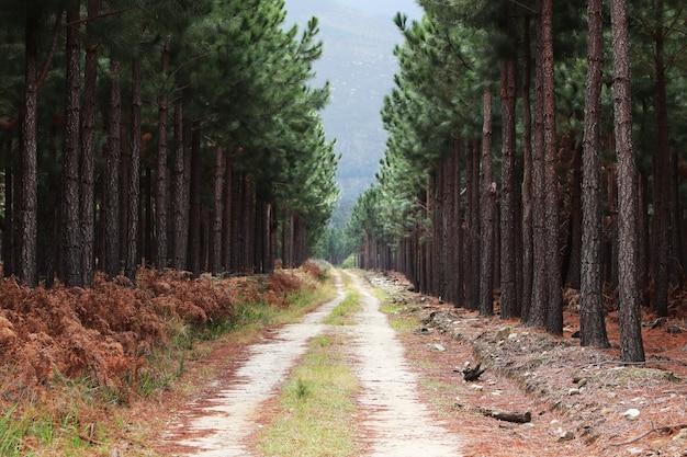 Belo caminho de cascalho passando por árvores altas em uma floresta que leva às montanhas