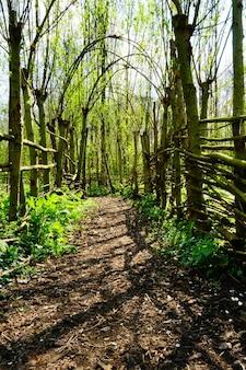 Belo caminho no jardim em um dia ensolarado