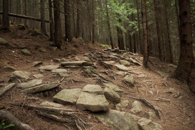 Belo caminho rochoso na floresta de pinheiros. conceito de viagens