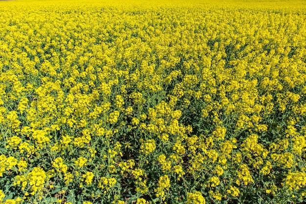 Belo campo de bast com flores verdes e um céu azul