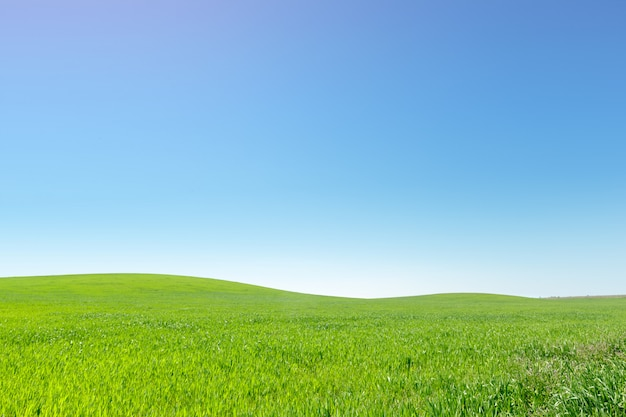 Belo campo verde