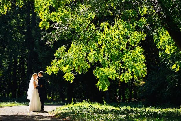 Belo casal de noivos em pé juntos sob o galho de árvore verde