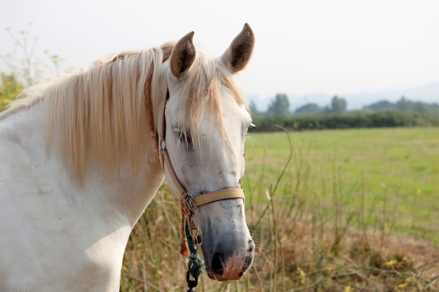 Belo cavalo livre nas pastagens