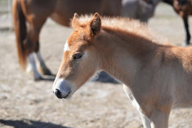Belo cavalo pônei marrom passeios na natureza no jardim zoológico