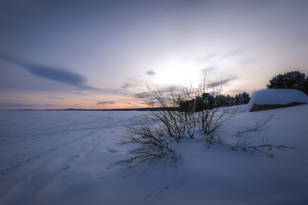 Belo cenário com muitas árvores sem folhas em um terreno coberto de neve durante o pôr do sol