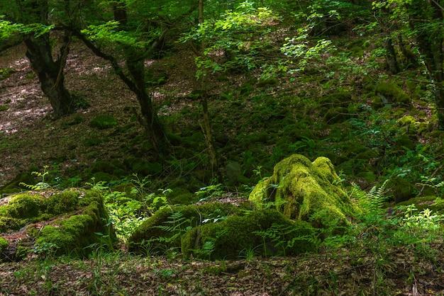 Belo cenário de floresta decídua