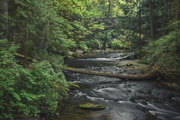 Belo cenário natural de um pequeno rio com muito verde e uma ponte velha