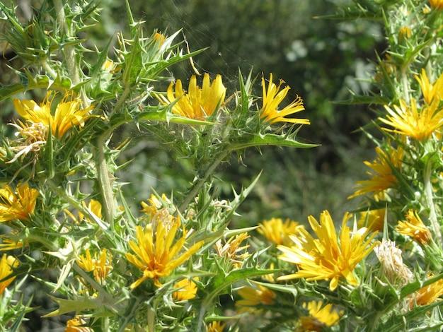 Belo close da vegetação arbustiva com flores e espinhos