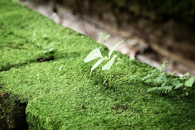 Belo close de folhas e musgo