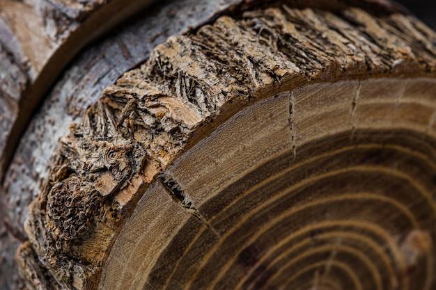 Belo conceito macro madeira