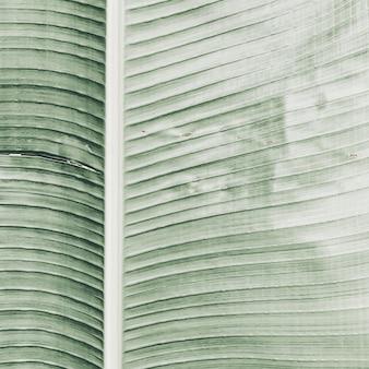 Belo galho de banana tropical. padrão minimalista e com cores verdes brilhantes