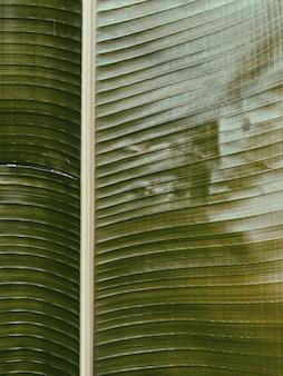 Belo galho de banana tropical. padrão minimalista e com filtro retro vintage de tons verdes