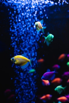 Belo grupo de peixes do mar. vida colorida subaquática. close up ternário dos peixes amarelos brilhantes do aquário. foco seletivo
