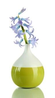 Belo jacinto em um vaso, isolado no branco
