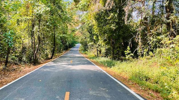 Belo lugar tranquilo, estrada para a floresta profunda.