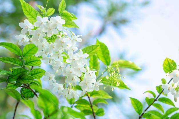 Belo monte de flor branca close-up