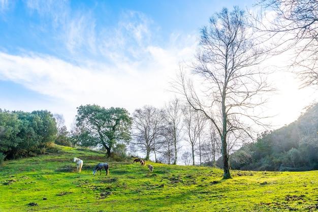 Belo nascer do sol com animais na floresta de faias do monte arno, no município de mutriku, em gipuzkoa. país basco, espanha
